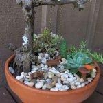 40 Beautiful Indoor Fairy Garden Ideas (4)