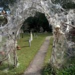 30 Awesome Outdoor Halloween Decorations Ideas (13)